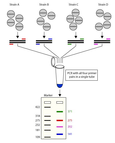 how to detect mutations by pcr